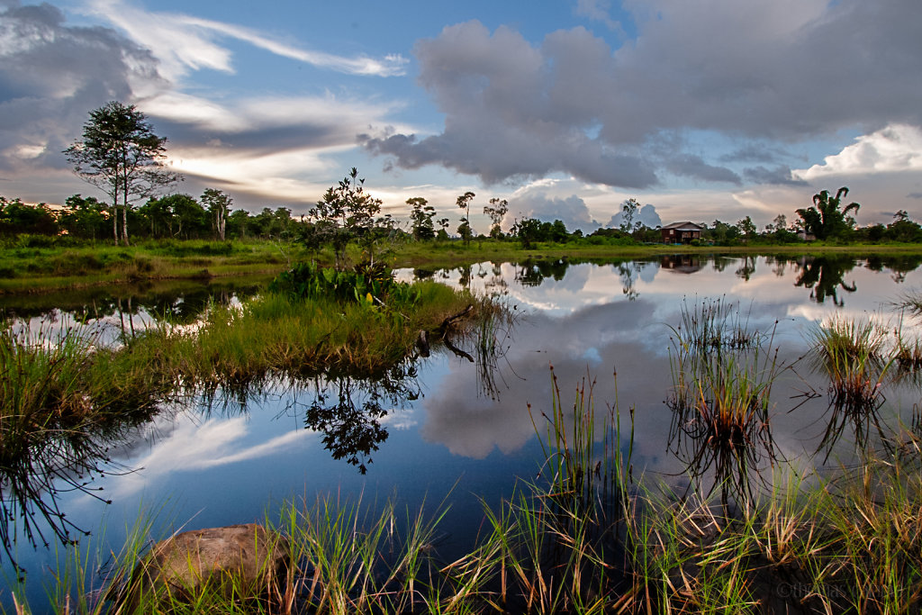 Marsh on the Boloven plateau, Laos